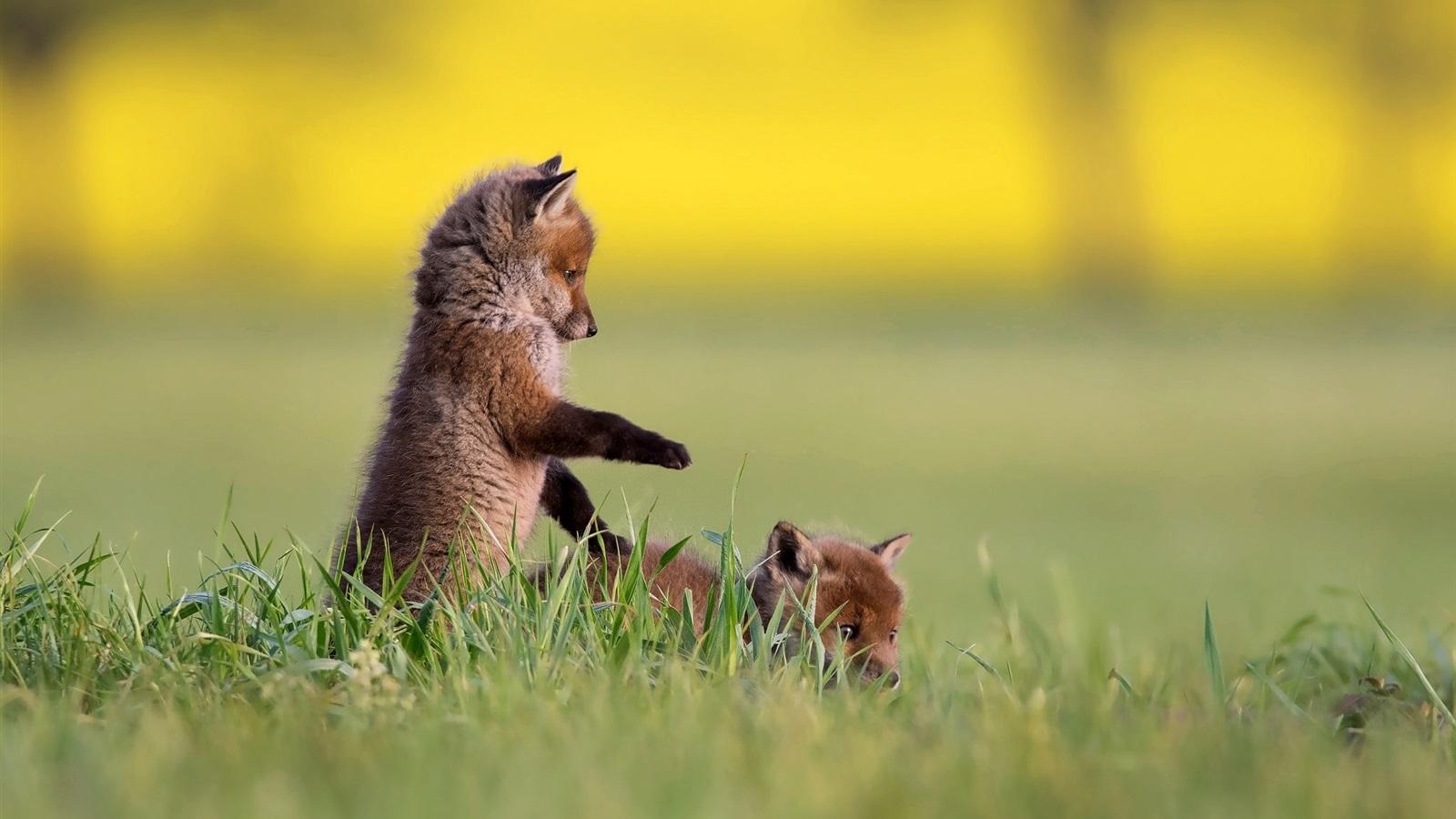Обои Хищник, позитив, тема, малыш. Животные foto 7